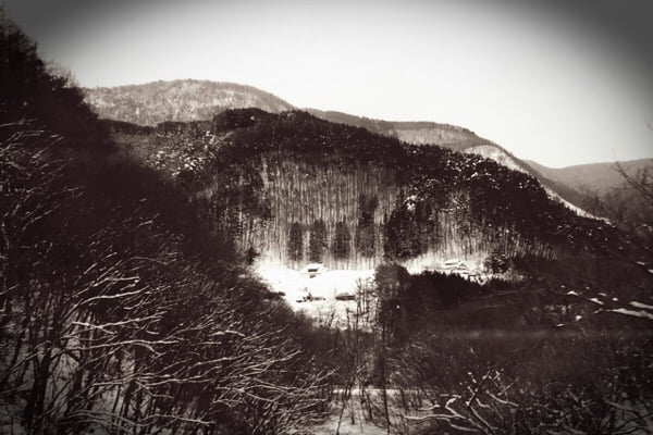 山のなかのうさぎ