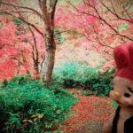 季節のブレンド・秋「秋唄」