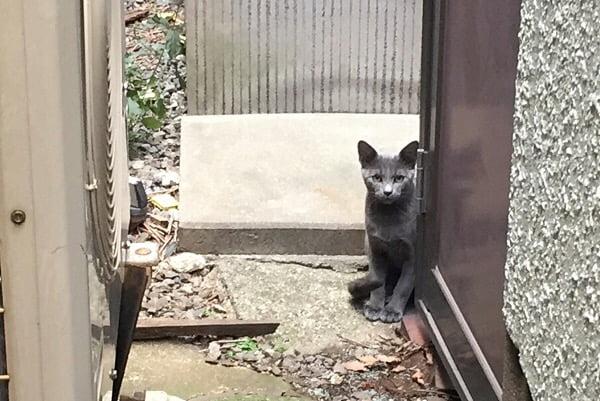 もう1匹の子ネコ。 キジトラはどこ?と尋ねてくるような目線