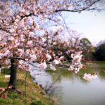 季節のブレンド・春「うららか 2016」