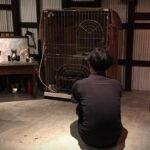 三毛猫さん、里親さん候補のお家でお試し生活へ
