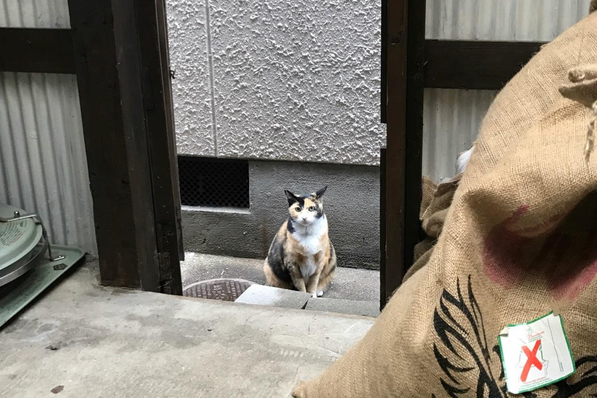 野良猫さん、裏口からずっとお店の様子を伺っていました。