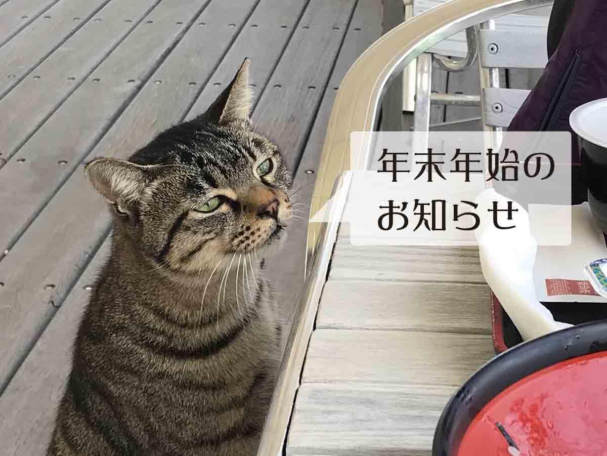 道の駅あわじにた野良猫